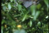 http://gardenpanorama.cz/wp-content/uploads/villa_garzoni_sken356_016-170x115.jpg