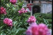 http://gardenpanorama.cz/wp-content/uploads/villa_garzoni_sken360_018-170x115.jpg