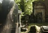http://gardenpanorama.cz/wp-content/uploads/vojta_krunt_olsany_1_01-170x115.jpg