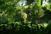 http://gardenpanorama.cz/wp-content/uploads/worlitz_img_8336_044-170x115.jpg