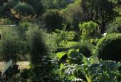 https://gardenpanorama.cz/wp-content/uploads/Chelsea_Physic_GardenIMG_9639_0151-170x115.jpg