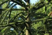 https://gardenpanorama.cz/wp-content/uploads/Chelsea_Physic_GardenIMG_9681_0181-170x115.jpg