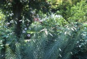 https://gardenpanorama.cz/wp-content/uploads/boboli__004-170x115.jpg