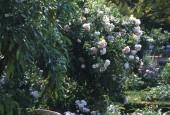 https://gardenpanorama.cz/wp-content/uploads/boboli__006-170x115.jpg