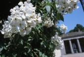 https://gardenpanorama.cz/wp-content/uploads/boboli__016-170x115.jpg