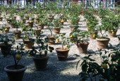 https://gardenpanorama.cz/wp-content/uploads/boboli__019-170x115.jpg