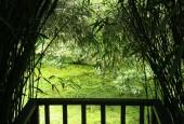 Heligan, Lost Gardens of Heligan