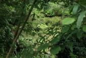 https://gardenpanorama.cz/wp-content/uploads/lost_gard_heliganimg_31391-170x115.jpg