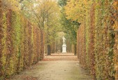 https://gardenpanorama.cz/wp-content/uploads/shonbrunn_img_7568_0052-170x115.jpg