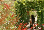 https://gardenpanorama.cz/wp-content/uploads/trauttmansdorffimg_5770_018-170x115.jpg